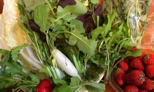 「こくべじ」-国分寺産の野菜と僕-